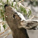Got deer? Freeze them out this winter