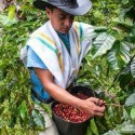 Grocery insight: What is fair trade and how does it make a difference?