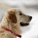 How to keep your pets healthy and happy all winter long
