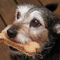 Bow wow chow: How to make easy, healthy treats for your dog at home