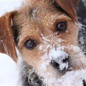 Should you 'winterize' your pet?