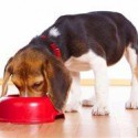 Natural, balanced and beyond: Making sense of dog food labels