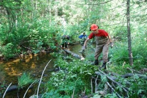 trout habitat work